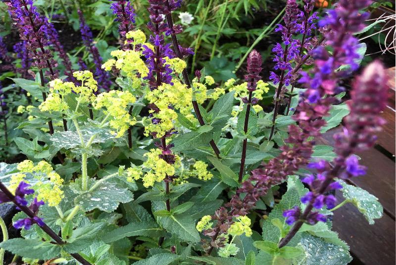 Trädgårdsservice med Plantering i trädgården